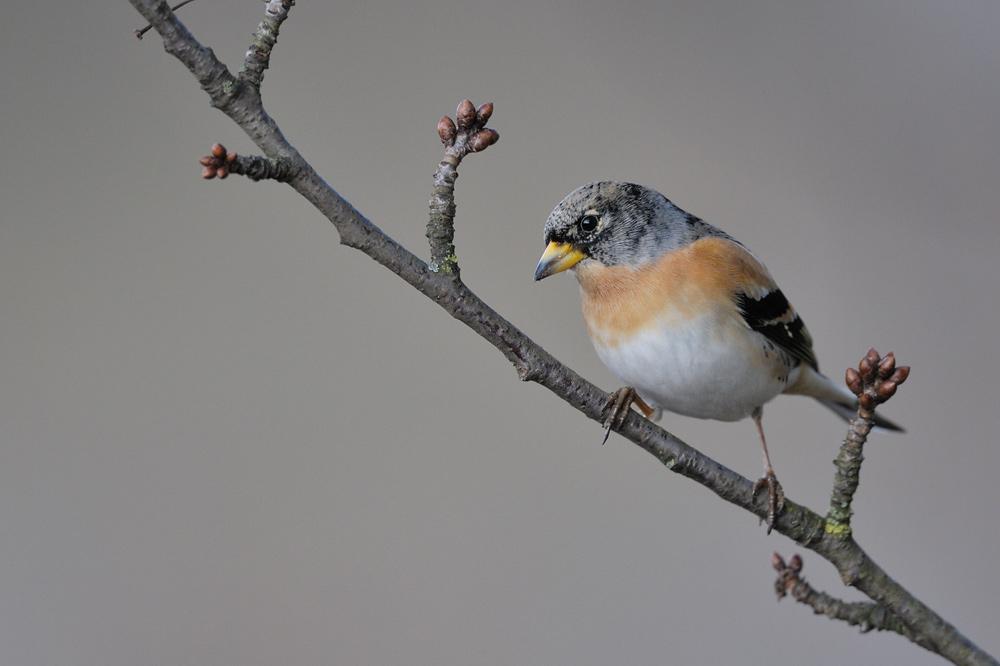 kameraausrüstung für vogelfotografie